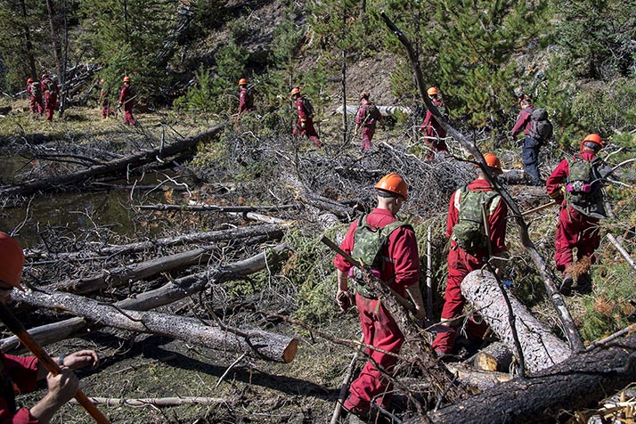 Members of 39 and 41 Canadian Brigade Groups search the forest near Resky Creek, British Columbia preventing hotspots from reigniting the wildfire that has devastated the region, during Operation LENTUS, September 4, 2017. Photo: Corporal I. Thompson, Canadian Forces Joint Imagery Center RE31-2017-0220-020